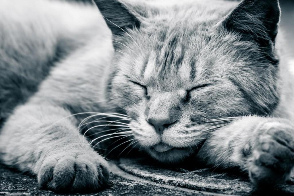 ベッカー型筋ジストロフィーの筋力低下による寿命への影響と寝たきりになる可能性について