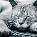 路上で爆睡する猫