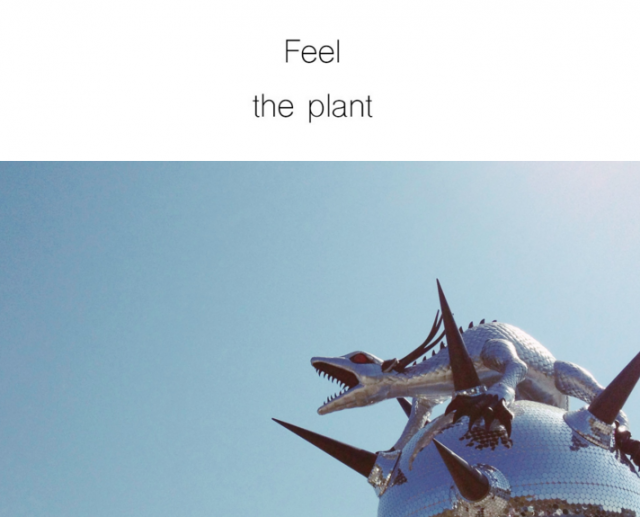 feel the plant