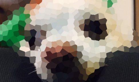 愛犬チョコのモザイク画像
