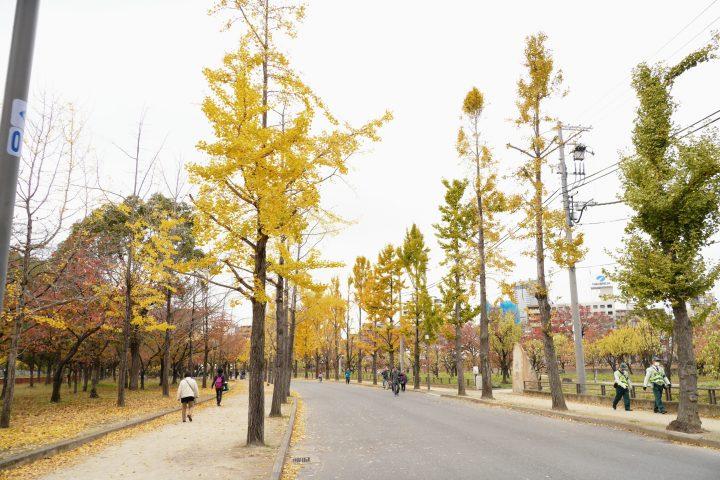 銀杏並木が秋っぽくてめっちゃいい雰囲気